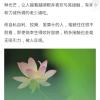 乖乖_144710-好孕帮用户