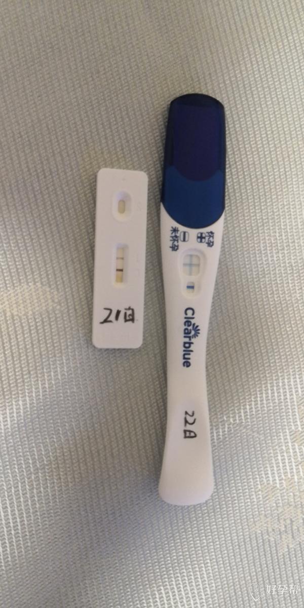 我怀啦|短方案鲜胚移植成功怀上了