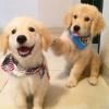 狗宝宝-好孕帮用户
