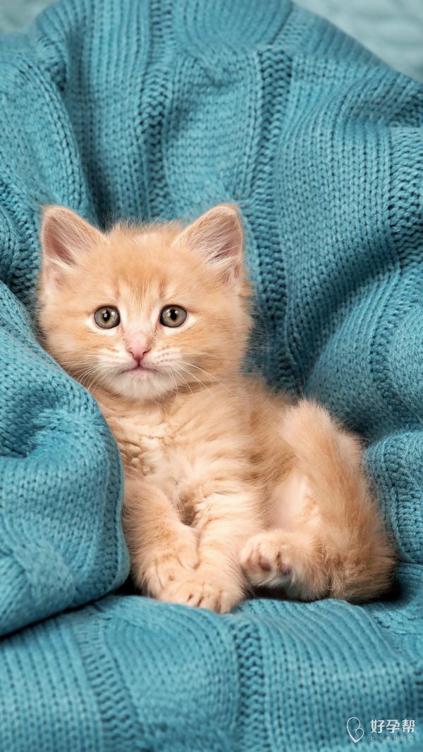 看看这只超萌的小猫咪!