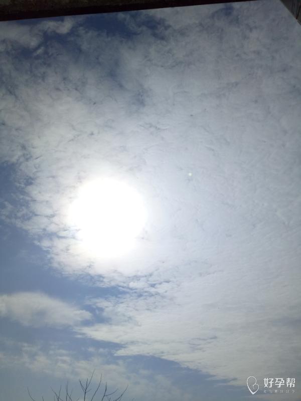 今天的太阳真好,每天都是这么好的天气就好了-其它-情感交流论坛-好孕帮