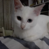 崔小猫-好孕帮用户