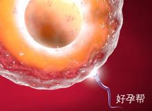 """关于""""卵泡发育""""的5问5答,一定有你想知道的!"""