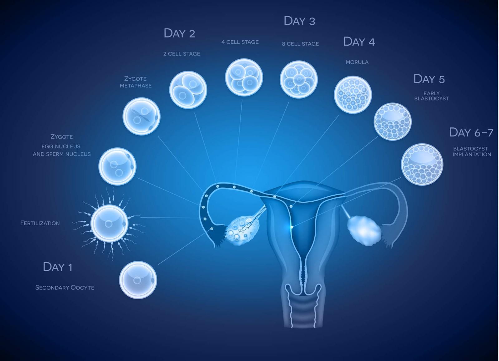 你的排卵期测错了!四大方法助你轻松监测排卵期,一次中标不是梦!