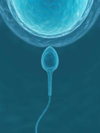 为什么人们都选择第三代试管婴儿,优点是什么呢?
