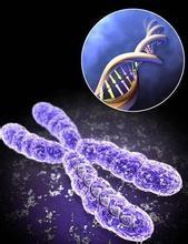 染色体检查-上门采血