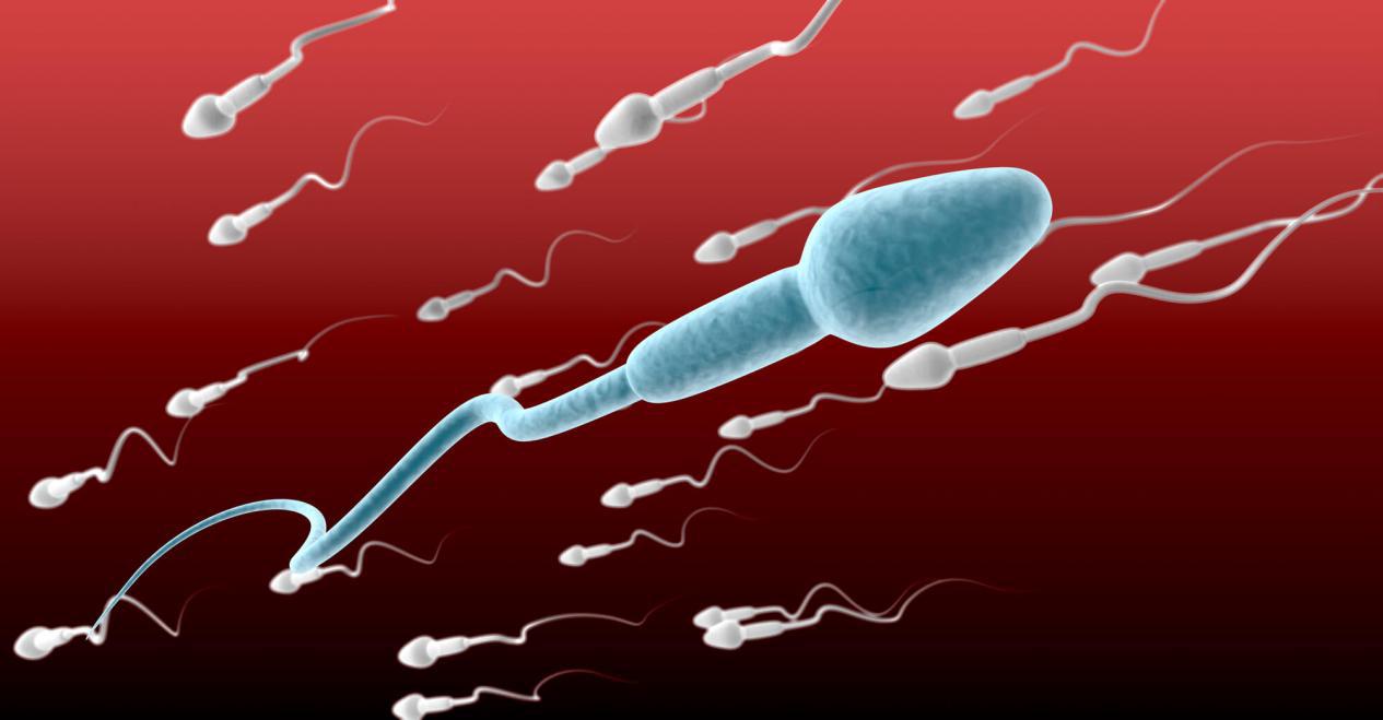 中度弱精症怀孕几率大吗?怎样提高怀孕几率呢?